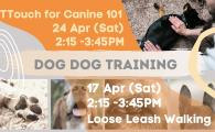 Dog Dog Training