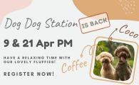 Dog Dog Station